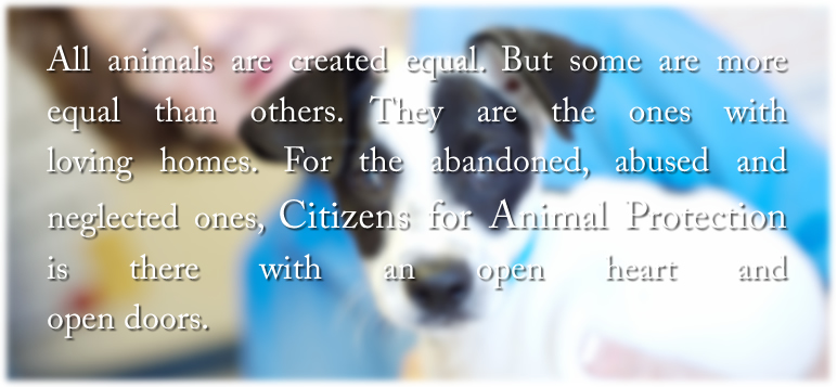 All animals are created equal. But some are more equal than others. They are the ones with loving homes. For the abandoned, abused and neglected ones, Citizens for Animal Protection is there with an open heart and open doors